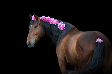 Bay horse with pink pions in mane on black background Fototapete