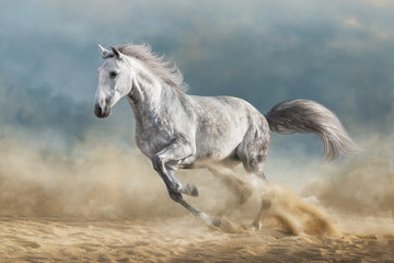 Tuinposter Bestsellers Grey horse galloping on sandy field against dramatic blue sky