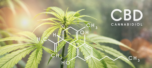 Cbd formula. Cannabidiol molecule structure compound with plant. Medical marijuana molecules, cannabidiol biochemistry formula. Chemistry addiction