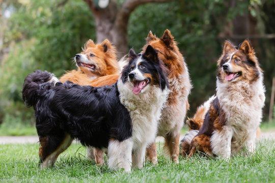 pack of cute elo dogs outdoors