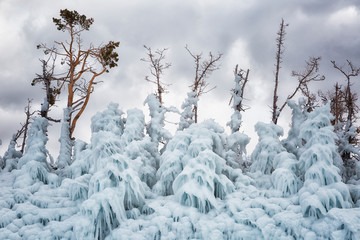 Trees covered with ice. Lake Baikal. Russia
