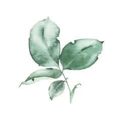 Watercolor greenery floral rose leaf plant forest