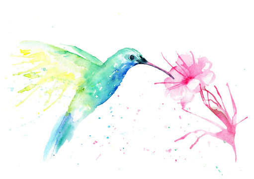 watercolor drawing of a hummingbird bird with a flower