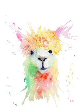 watercolor drawing of an animal - alpaca, drops, splashes