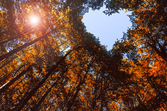 Autumn Forest with Heart Shaped Blue Sky