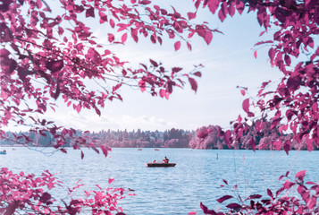 Father and son in rowboat among purple trees