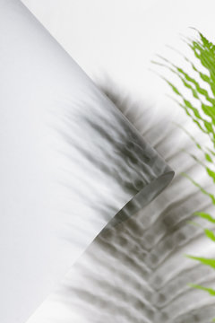 Folded paper and fern leaf