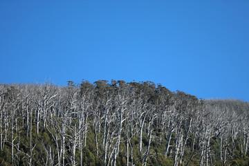 Foto auf Leinwand Fantasie-Landschaft Regenwald in Australien