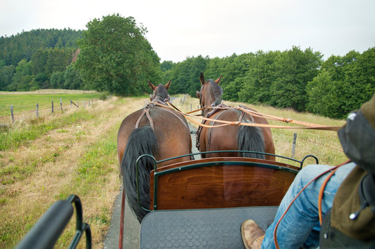 Two horses (Saxon Thuringian heavy warm blood) pull a carriage into green landscape. In the foreground is the coachman, he wears casual clothes.