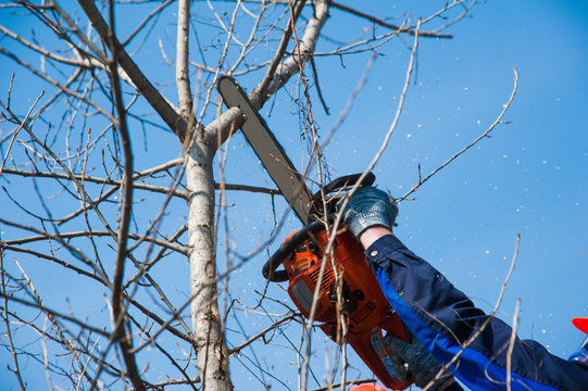 Tree felling with a large chainsaw