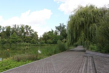 Aluminium Prints Garden Holzsteg am großen Teich im Kurpark von Bad Nauheim in Hessen