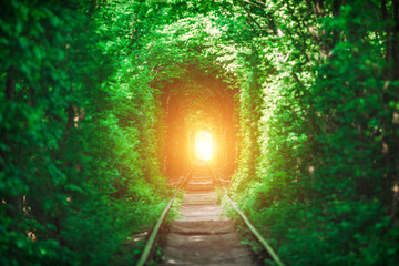 a railway in the spring forest tunnel of love Fototapete