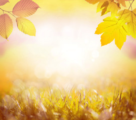 Falling yellow leaves and grass bokeh background with sun beams.