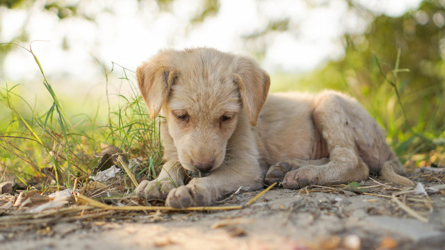 Sad little puppy starving.