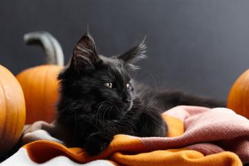 Halloween black cat in warm plaid among pumpkins Fototapete