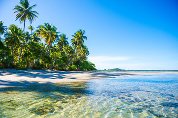 Bright scenic view of an empty, palm-fringed tropical beach in northeast Bahia, Brazil Wall mural