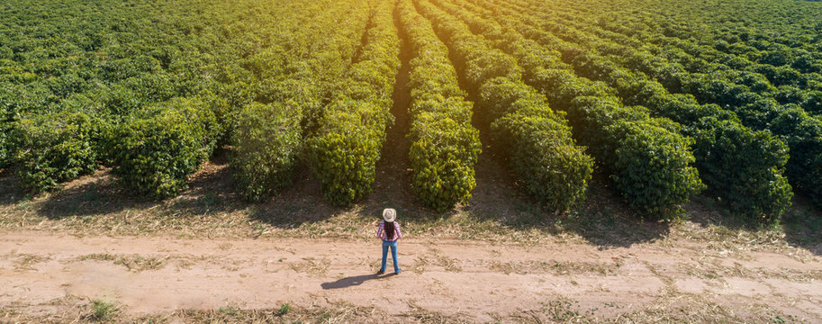 Young farmer woman checking out her coffee plantation. Brazilian farmer. Agronomist's day.
