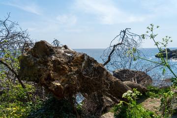 Image of a fallen tree on the seashore.