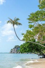 Coconut palm tree curved hanging over sea on the tropical beach, Thailand
