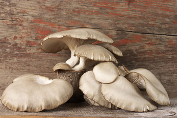Oyster mushrooms on wood
