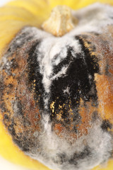 Close-up of rot and mold