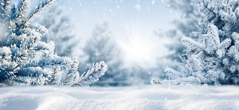 Blue winter christmas nature background frame, wide format. Snow-covered fir branches, snowdrift against defocused blurred forest and falling snow. Close-up, copy space.