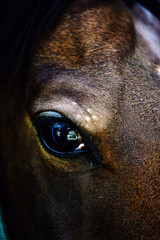Eye of a brown horse