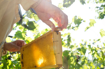 Beekeeper inspecting the brood nest against natural lights outdoor Fototapete