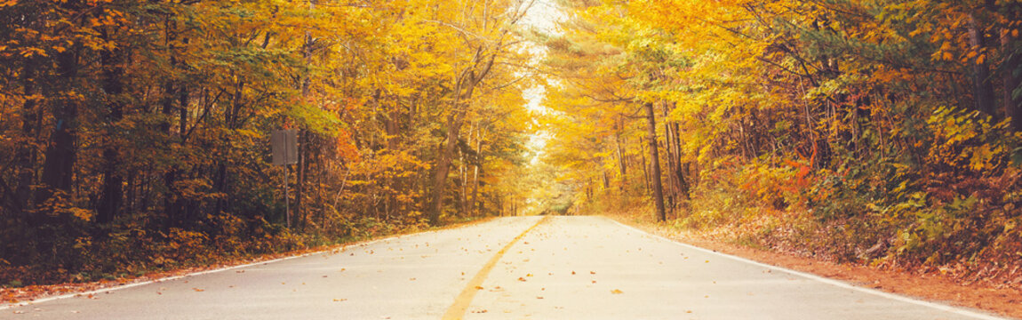 Empty road street in colorful autumn forest park with yellow orange red leaves on trees. Beautiful fall season outdoors. Natural background with copyspace. Web banner header for website.