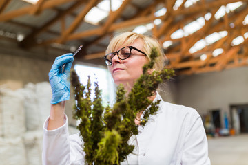 Scientist observing seeds of dry CBD hemp flowers with tweezers in factory Fototapete