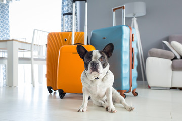 French bulldog sitting at packed travel baggages