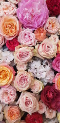 Background image of roses.  Colored fresh pastel roses. Pink and white roses and hydrangea. Background image of roses.  Colored fresh pastel color flowers.