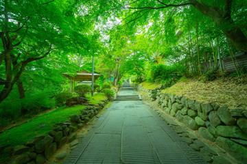 松島の寺の庭園