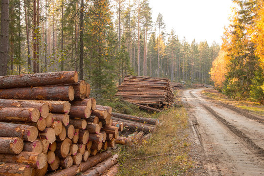 Timber in autumn in Sweden