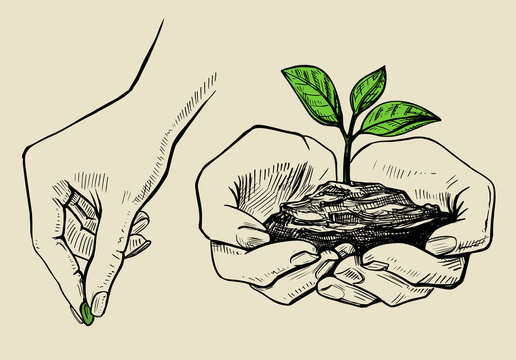 the plant in the hands grows