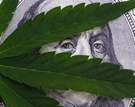 Close-up Photo of Cannabis leaves over United States Dollar Bills Isolated on White Background.