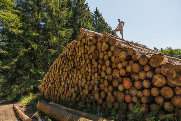 A man has climbed a huge pile of wood. On one of the lower tree trunks is written in German: Enter prohibited.