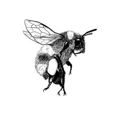 Hand-drawn design. Ink bumblebee / bee. Modern illustration. Unique style. Black and White