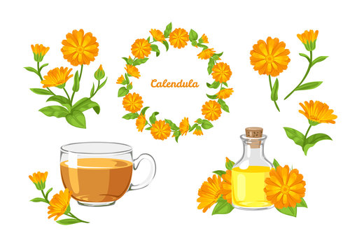 Calendula set. Vector cartoon orange flowers isolated on white background. Marigold flowers wreath, tea, calendula oil and bouquet in cartoon simple flat style. Healing herbs.