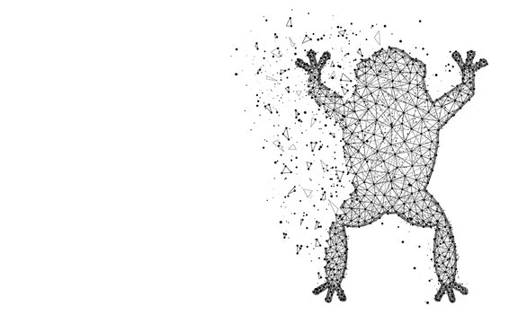 Frog low poly design, Amphibian animal abstract geometric image, Toad wireframe mesh polygonal vector illustration made from points and lines on white background