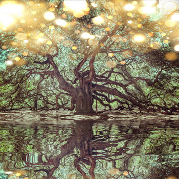 Angel Oak Tree on John's Island, South Carolina. This tree is located near Charleston and is over 1000 years old