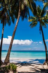 Palm trees growing on a beautiful, sandy tropical beach next to a shallow ocean (White Beach, Boracay)