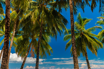 Palm trees on a beautiful, relaxing tropical beach