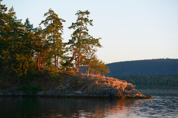 Canada, British Columbia, Gulf Islands, Wallace Island. Arbutus and fir trees on the point at Conover Cove