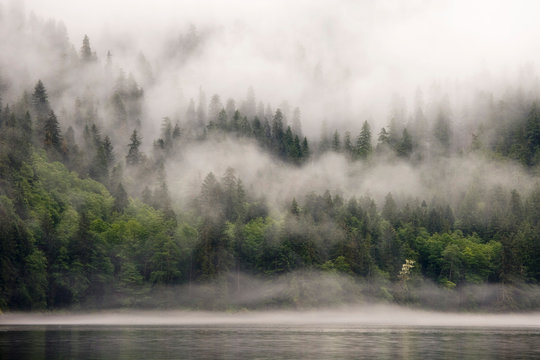 Canada, British Columbia, Fiordlands Recreation Area. Fog-shrouded forest next to ocean inlet.