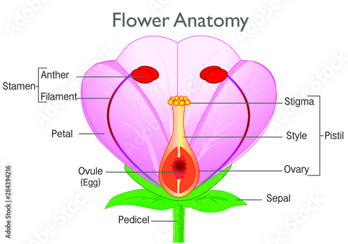 Flower Anatomy Plant Reproductive System Diagram Annotated