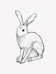 Digital drawing. Realistic graphic illustration of a hare. Vintage style. Black and white sketches of animals.