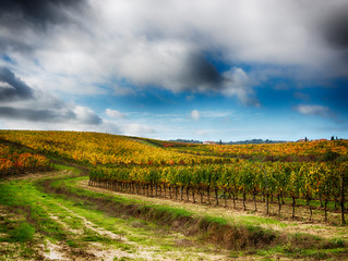 Papiers peints Vignoble Italy, Montepulciano, Autumn Vineyard in full color near Montepulciano