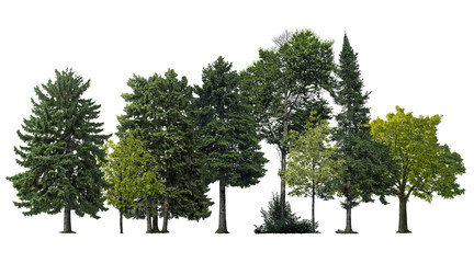 Trees and pines isolated on white background. Forest landscape Fotoväggar