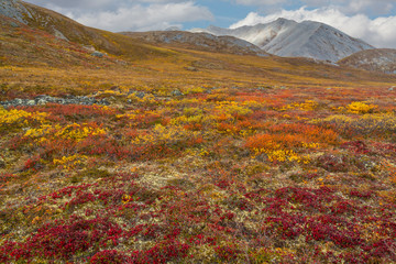 USA, Brooks Range, Gates of the Arctic National Preserve. Autumn color in tundra. Credit as: Don Paulson / Jaynes Gallery / DanitaDelimont.com